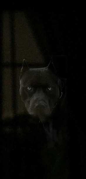 Spike, Shadow of my Netherworld